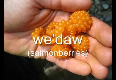 We'daw salmonberries