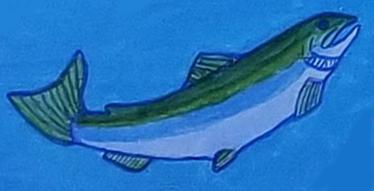 valhuk_salmon_hebalo